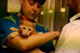 Учёные: кошки могут заражаться коронавирусом