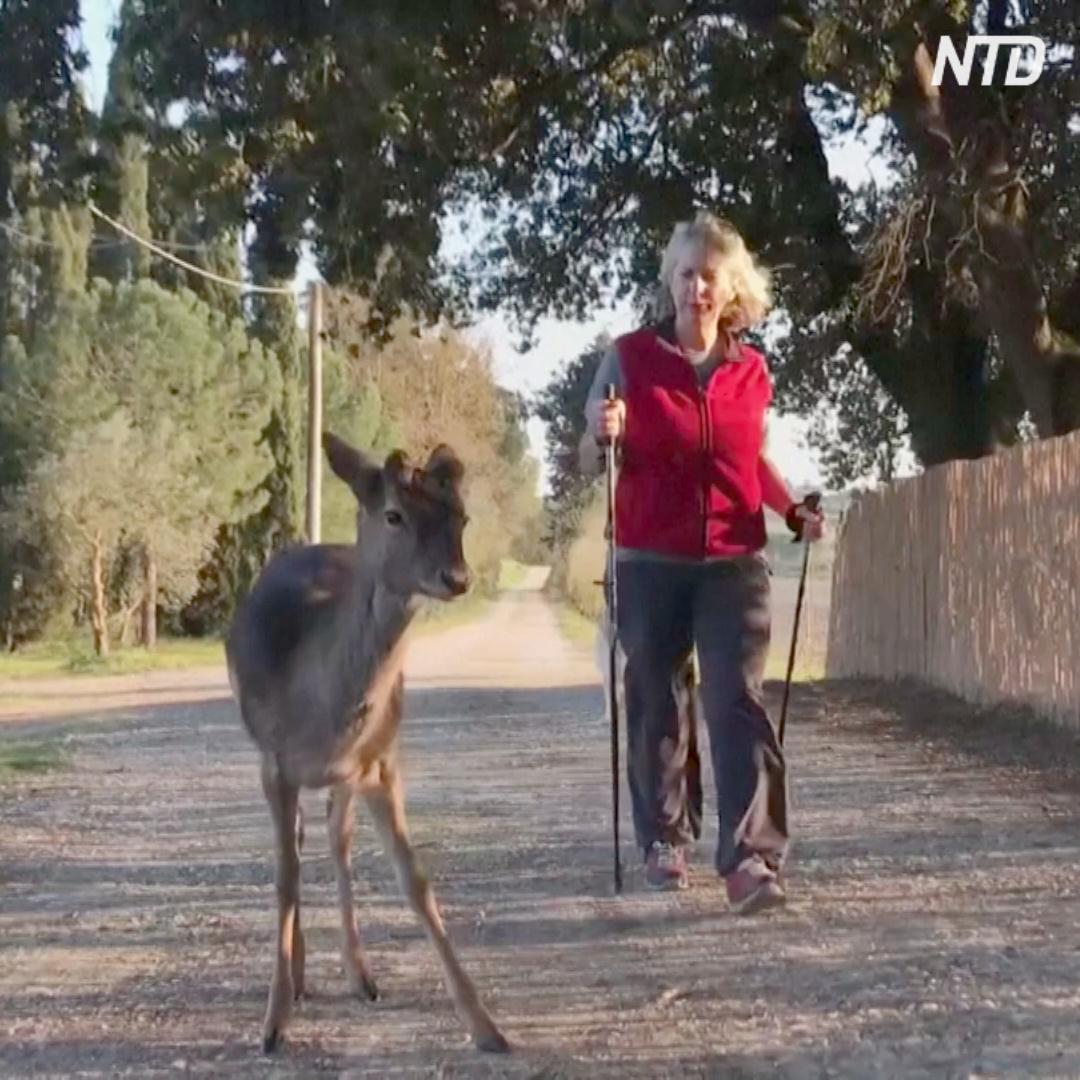 Животные осмелели на карантине: к итальянке на прогулке прибивается оленёнок