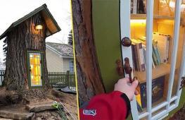 Женщина превратила 110-летнее дерево в мини-библиотеку