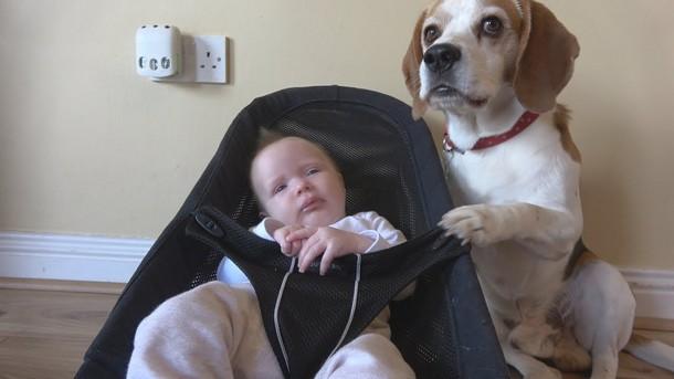 Novyj risunok 1 4 - Что умеет делать пёс, который стал няней для младенца. Замечательное видео