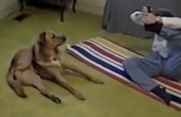 Собака быстрее хозяйки запомнила позу йоги. Весёлое видео
