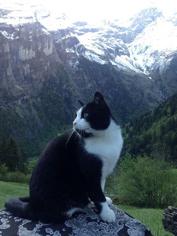 Novyj risunok 2 8 - Как кошка спасла туриста в горах