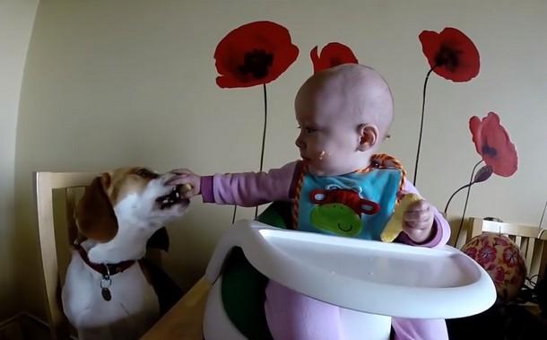 Novyj risunok 3 4 - Что умеет делать пёс, который стал няней для младенца. Замечательное видео