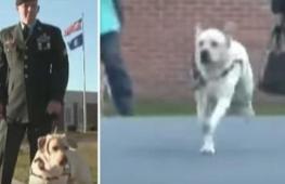 Зачем мужчина с собакой пришёл к заключённой