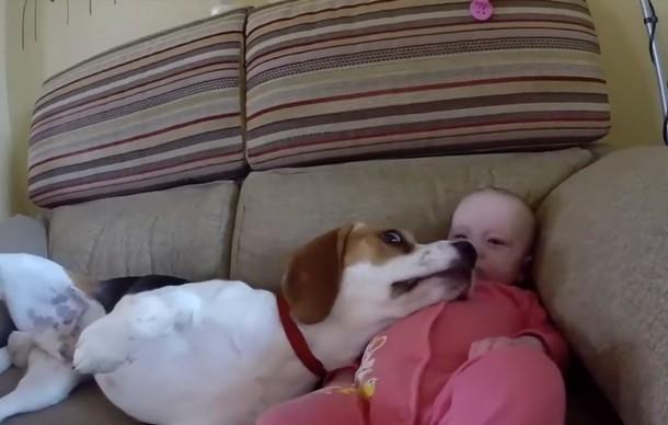 Novyj risunok 5 3 - Что умеет делать пёс, который стал няней для младенца. Замечательное видео