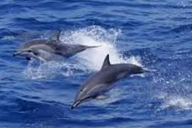Дельфины нашли способ спасти собаку