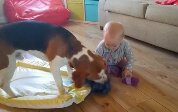 Novyj risunok 8 1 - Что умеет делать пёс, который стал няней для младенца. Замечательное видео
