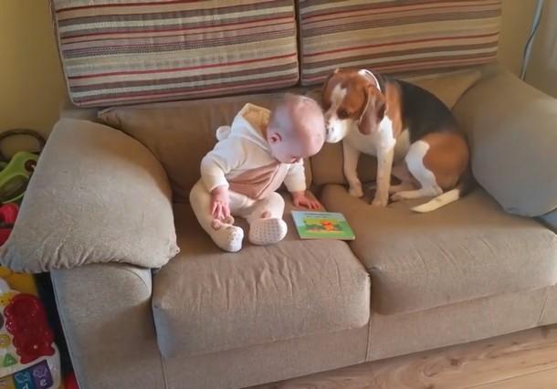 Novyj risunok 9 1 - Что умеет делать пёс, который стал няней для младенца. Замечательное видео