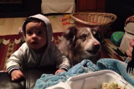 Чего не сделаешь ради еды: у собаки открылись удивительные способности