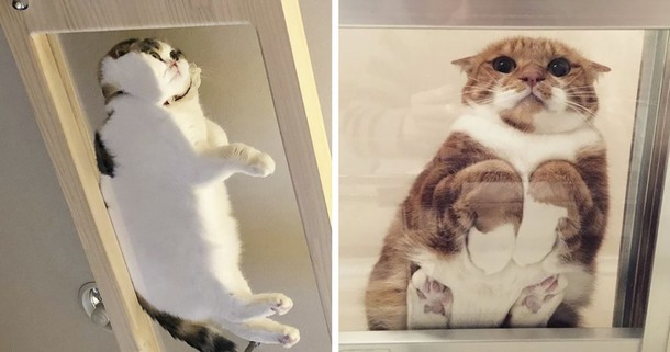 Зачем владельцам кошек нужен стеклянный стол