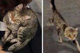 Бездомный кот сам выбрал хозяйку