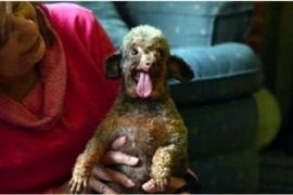 Собака радуется жизни после нескольких лет неволи