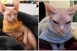 Кот-сфинкс поражает своими образами пользователей сети