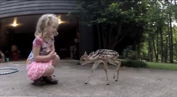 Видео трогательной встречи девочки и оленёнка посмотрели свыше 6 млн раз