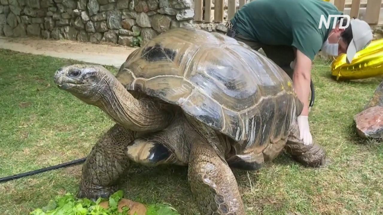 Старейшая черепаха в Турции отпраздновала столетие