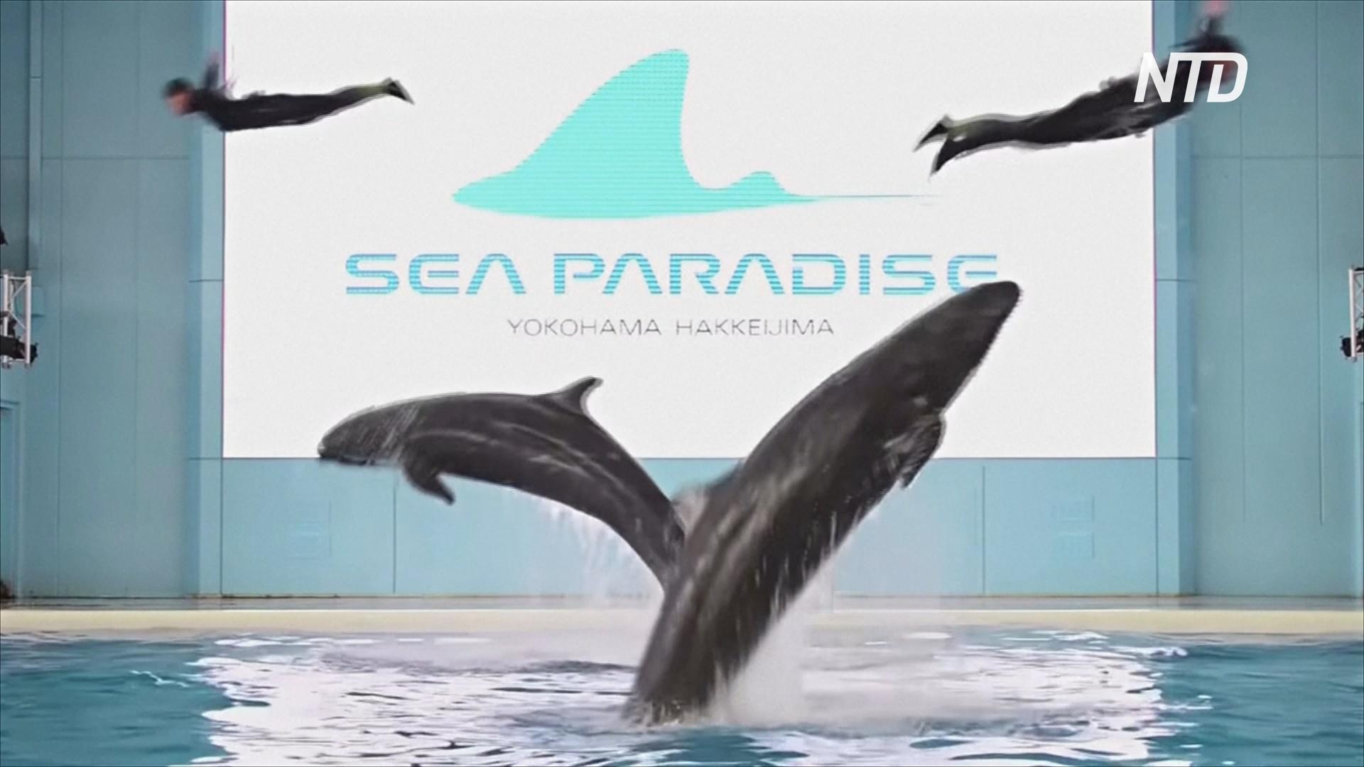 Онлайн-шоу дельфинов и пингвинов развлекают японцев во время карантина