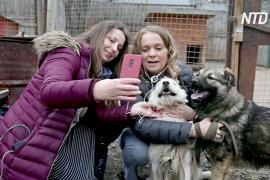 Онлайн-марафон помог московским приютам пристроить десятки кошек и собак