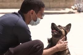 Закрытые границы разлучили тысячи собак и кошек с их владельцами