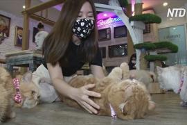 Тайцы устремились в котокафе, чтобы забыть о трудностях карантина
