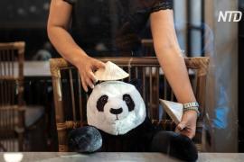 Плюшевые панды – новая тактика соцдистанцирования в ресторане Бангкока