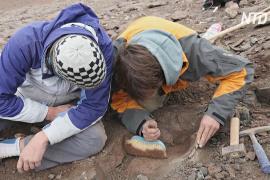 Скелет одного из последних мегарапторов обнаружили в Аргентине