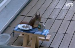 В Мюнхене лесная белка наслаждается завтраками за собственным столиком