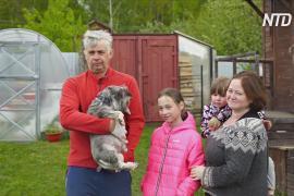 Карантин на даче: семья москвичей разводит кур и выращивает овощи