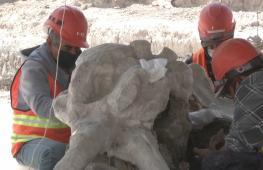 В Мексике откопали останки 60 мамонтов, завязших в древнем озере