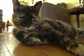 Пожилая французская кошка заразилась COVID-19 и выздоровела