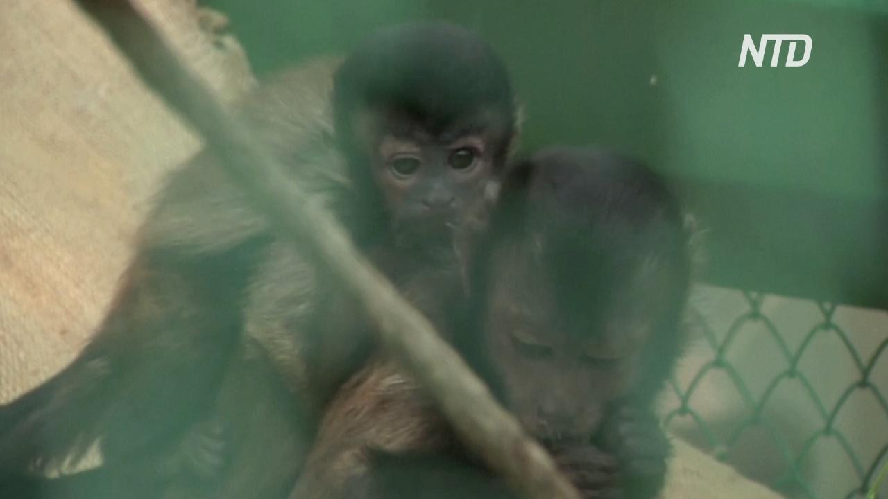 В красноярском зоопарке – беби-бум