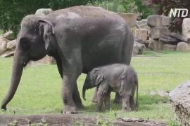 В Пражском зоопарке новорождённый слонёнок вышел к гостям