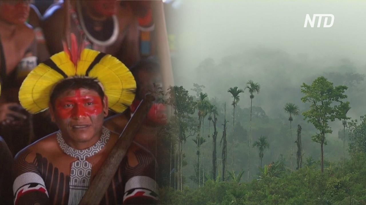 Бразильская часть лесов Амазонии исчезает всё быстрее