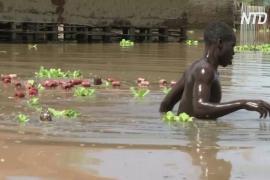 «Нашего дома больше нет»: сильнейшее наводнение в Кении