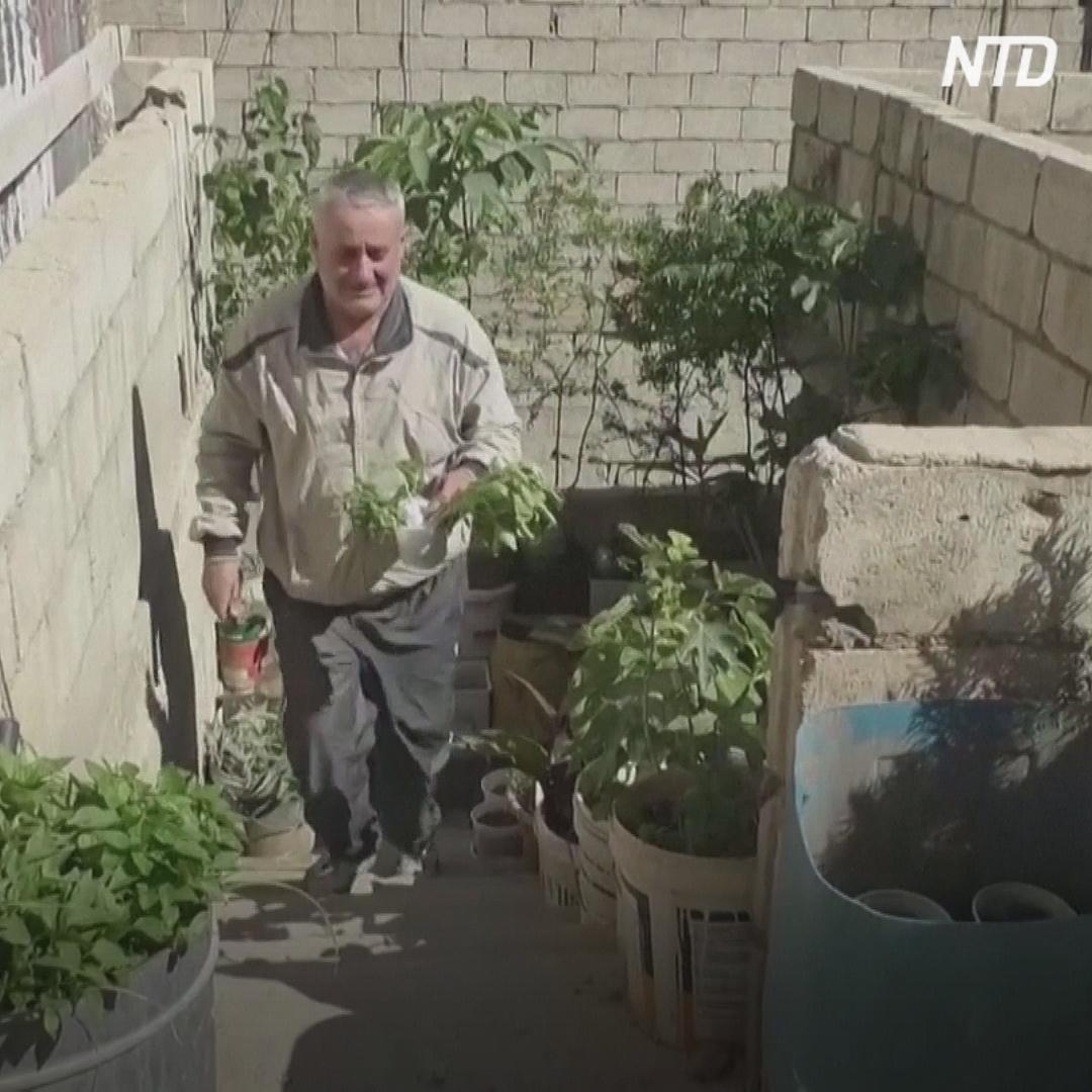 Чтобы прокормить семью, сириец на крыше устроил огород