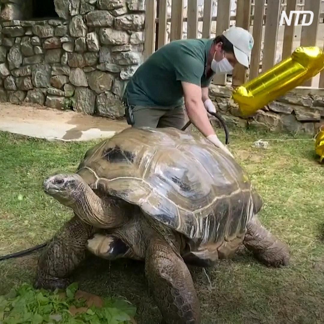 100 лет исполнилось самой старой черепахе Турции