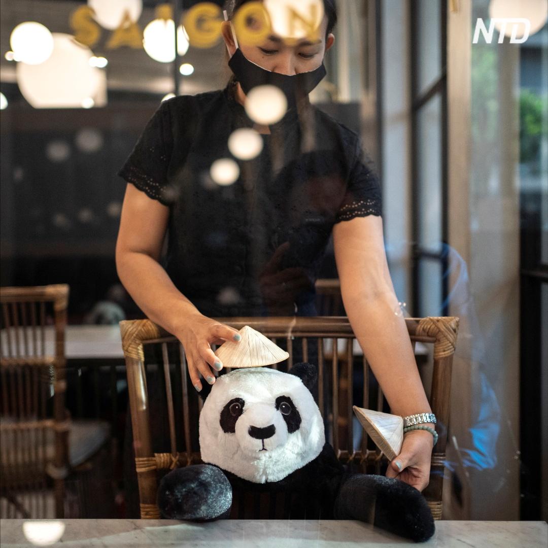 Панды в ресторане: как вьетнамцев учат дистанцироваться