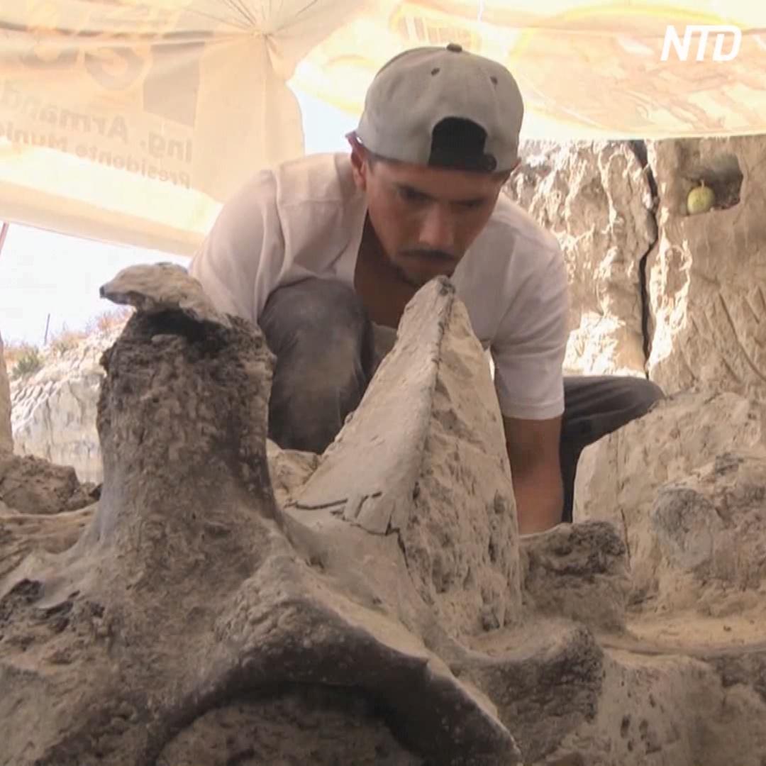 В Мексике нашли ловушки для мамонтов возрастом 15 тыс. лет