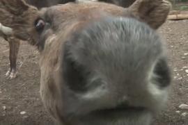 Пандемия вызвала беби-бум в красноярском зоопарке