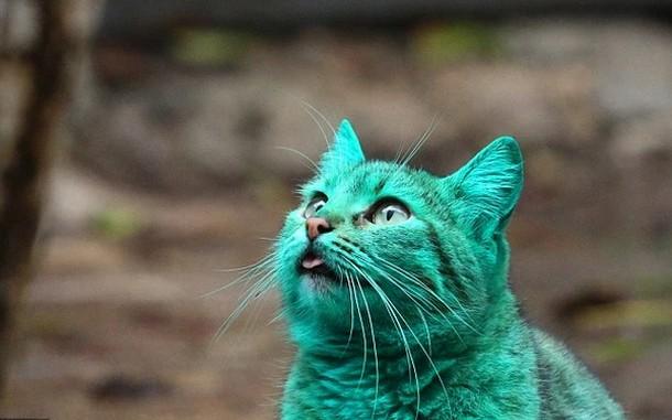 Почему болгарская кошка позеленела