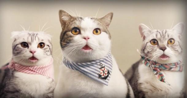 Как кошки сыграли в рекламном ролике. Весёлое видео
