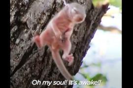 Спасение двухнедельного бельчонка сняли на видео