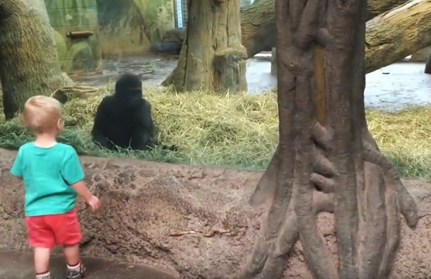 Видео игры ребёнка и обезьяны набрало около 3 млн просмотров