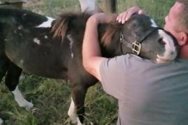 Как спасённый от убоя пони обнимает нового хозяина. Трогательное видео