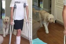 Как собака выражает сочувствие больному. Весёлое видео