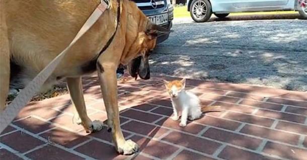 Собака не захотела отходить от слепого котёнка