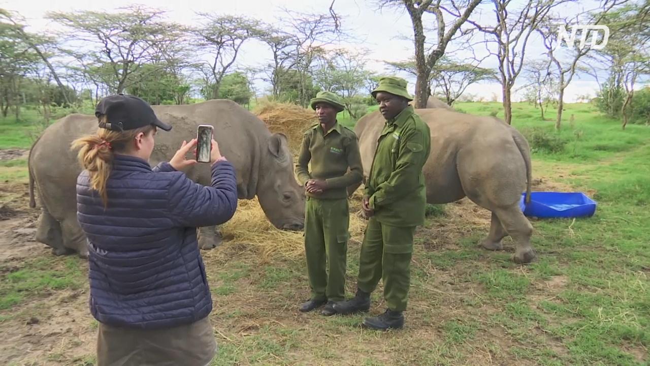 Кенийский заповедник показывает жизнь африканских животных в соцсетях