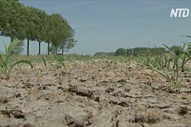 Бельгийские фермеры страдают от сильнейшей засухи за 120 лет