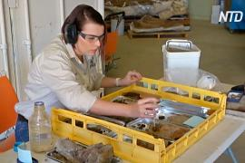 Эпидемия высвободила время для научных работ в музее динозавров в Австралии