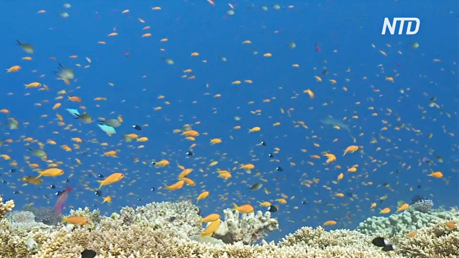 На Большом барьерном рифе произошло самое масштабное обесцвечивание