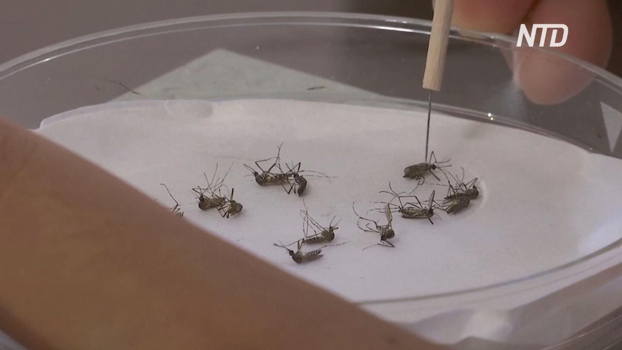 Вакцину от малярии из слюны москита делают в Камбодже